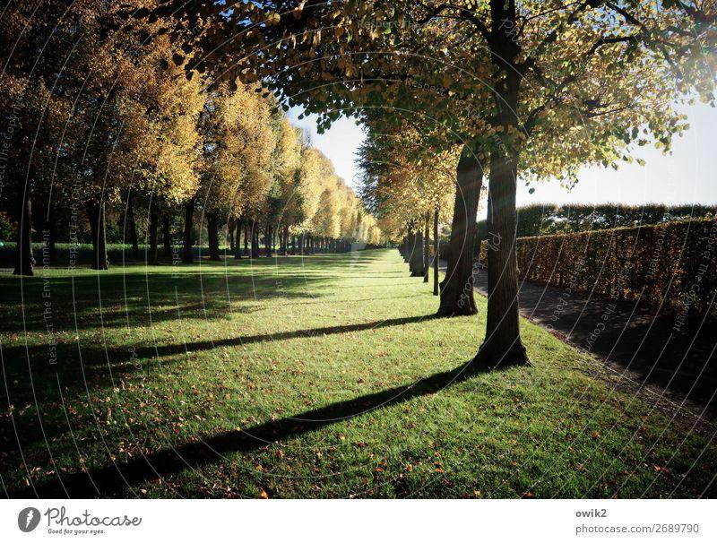 Akkuratesse Landschaft Pflanze Himmel Herbst Baum Gras Park Herrenhäuser Gärten Zusammensein Genauigkeit planen Präzision akkurat Hecke Baumreihe gerade