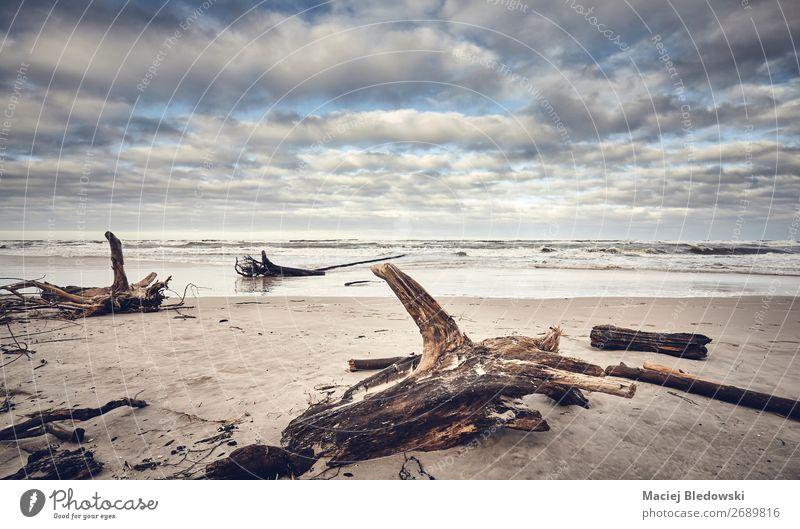 Strand nach einem Sturm mit Stümpfen und Wald Ferne Meer Insel Umwelt Natur Landschaft Sand Wetter Unwetter Wind Baum Küste Nostalgie Meereslandschaft Stumpf