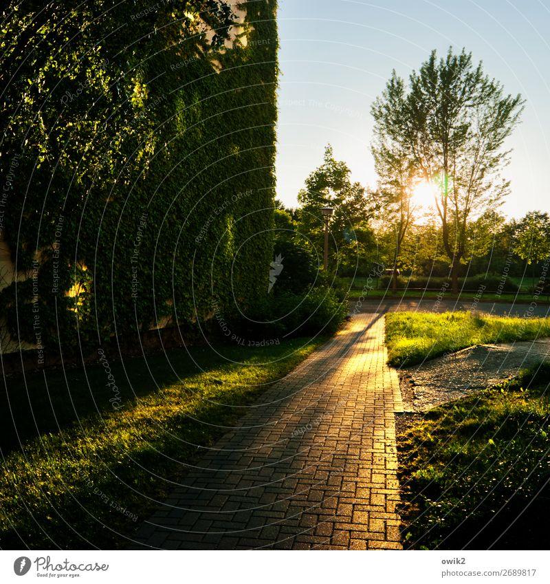 Leuchtspur Sommer Pflanze Sonne Baum Gras Gebäude Horizont leuchten Schönes Wetter Bürgersteig Wolkenloser Himmel Backstein Plattenbau Kleinstadt Efeu bevölkert