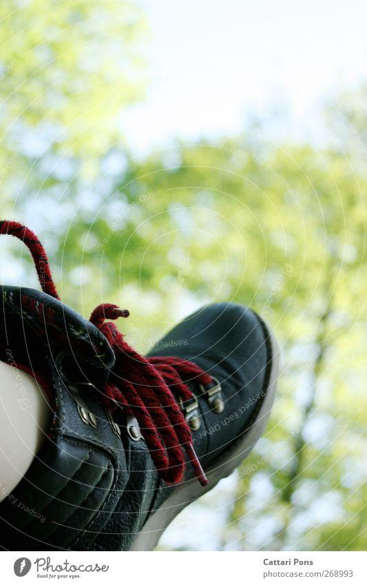 Sommer, Sonne, Photocase. Natur Ferien & Urlaub & Reisen Baum Pflanze ruhig Erholung Freiheit Mode Zufriedenheit Schuhe wild verrückt Bekleidung einzigartig nah