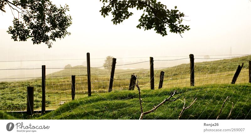 Scottland Natur grün schön Baum Freude ruhig Leben Berge u. Gebirge Gras Gesundheit hoch frei frisch Erfolg Abenteuer Idylle