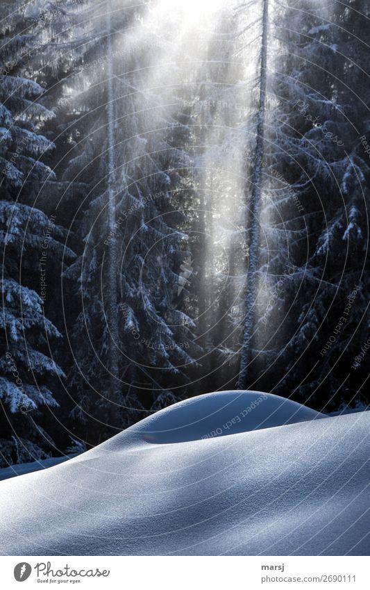Ein neues Jahr beginnt harmonisch Wohlgefühl ruhig Meditation Winter Schnee Winterurlaub Schneefall leuchten träumen Schneehügel sanft Schneelandschaft Wald