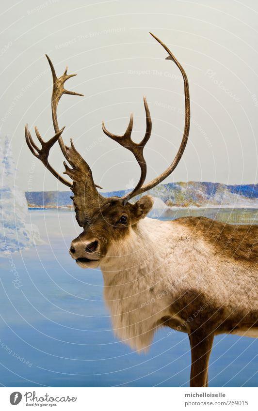 Himmel Natur blau weiß schön Winter Tier Einsamkeit kalt Schnee See braun Wildtier wild Boden Coolness