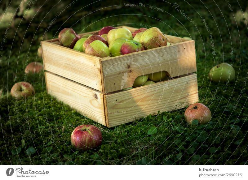 Apfelernte im Garten Lebensmittel Frucht Bioprodukte Vegetarische Ernährung Gesunde Ernährung Landwirtschaft Forstwirtschaft Herbst Kasten