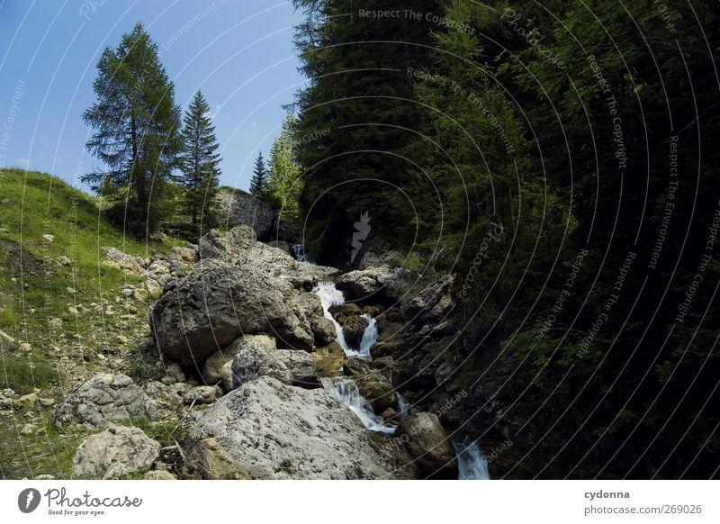 Wasserspender Wohlgefühl Erholung ruhig Ferien & Urlaub & Reisen Tourismus Ausflug Abenteuer Freiheit Umwelt Natur Landschaft Baum Wiese Wald Felsen Alpen Bach