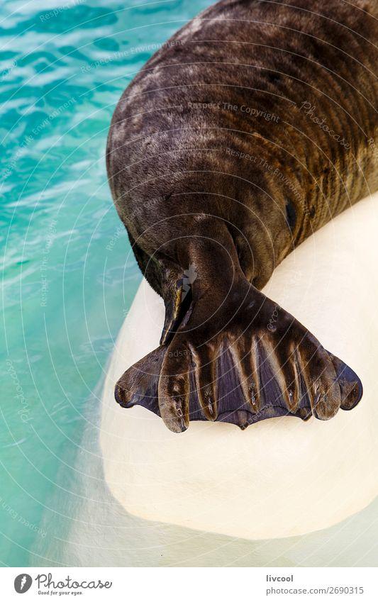 Dichtung Schwanzablage Museum Tier Sand Küste Oberlippenbart Aquarium 1 Coolness blau Fisch Frankreich Europa Biarritz Lapurdi Baskenland euskal-herria Fauna