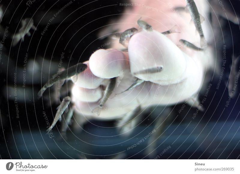 Pediküre mit Dr. Fisch Leben Fuß Gesundheit Schwimmen & Baden Reinigen Krankheit Körperpflege Fressen Barfuß Aquarium Zehen Schwarm Heilung Therapie Behandlung