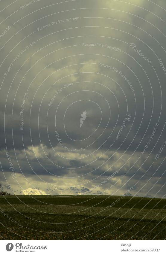 immer noch April Umwelt Natur Himmel Wolken Gewitterwolken Klima Klimawandel Wetter schlechtes Wetter Unwetter Wiese Feld bedrohlich dunkel Farbfoto