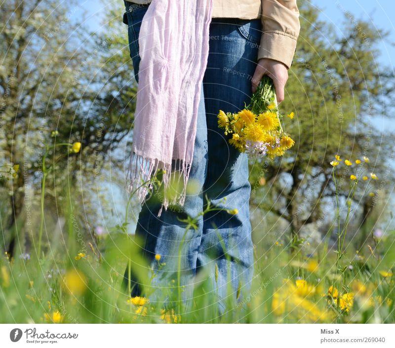gepflückt Mensch Frau Natur Pflanze Blume Erwachsene Wiese feminin Gefühle Frühling Gras Garten Blüte Romantik Schönes Wetter Blumenstrauß