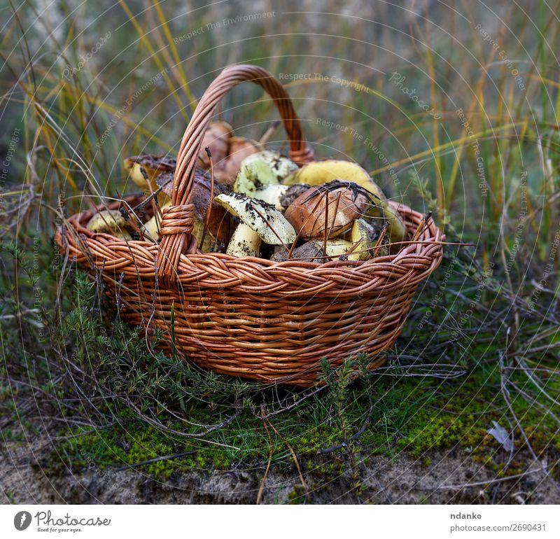 essbare Waldpilze Gemüse Vegetarische Ernährung Natur Herbst Gras frisch natürlich wild braun gelb grün weiß Boden Hintergrund Korb Lebensmittel Ernte