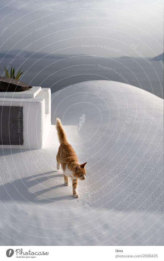 Lebensweg Katze Tier Wand Bewegung Mauer laufen Schönes Wetter Dach Haustier Fira