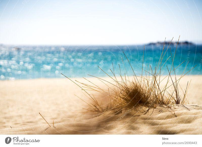 Strandtag Sand Sonne Ferien & Urlaub & Reisen Wärme Meer Himmel Gras Mallorca