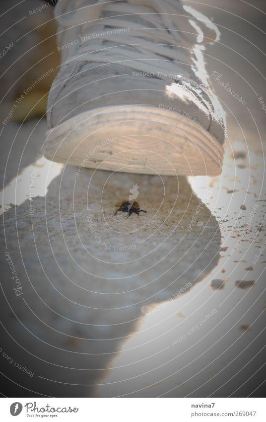 Hilfäää! Sommer Tier grau braun Wildtier wandern bedrohlich nah Todesangst Stress Käfer achtsam treten Schuhsohle