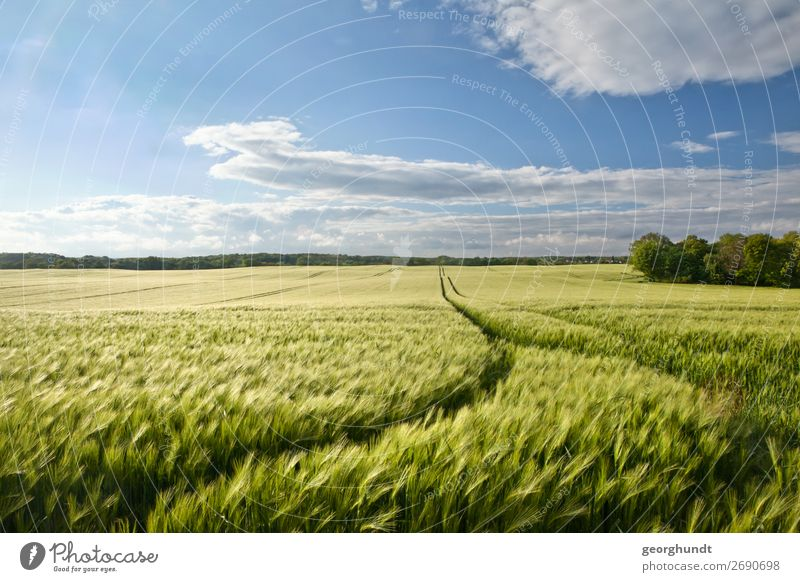 widebarley Ferien & Urlaub & Reisen Tourismus wandern Umwelt Natur Landschaft Pflanze Himmel Horizont Frühling Sommer Wiese Feld überbevölkert Gerste