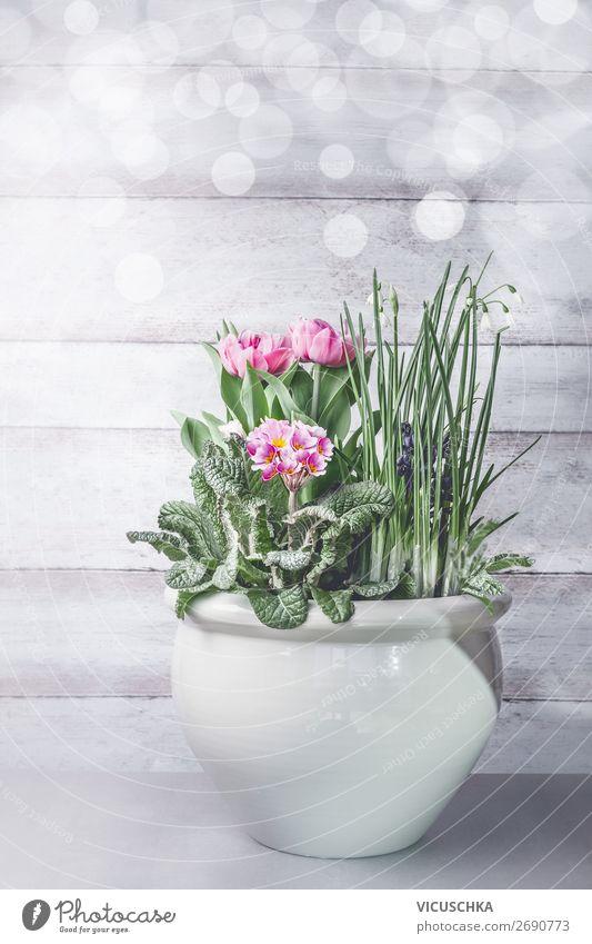 Frühling Blumen in Blumentopf Stil Design Häusliches Leben Garten Innenarchitektur Dekoration & Verzierung Natur Pflanze Tulpe Mauer Wand Terrasse Blumenstrauß