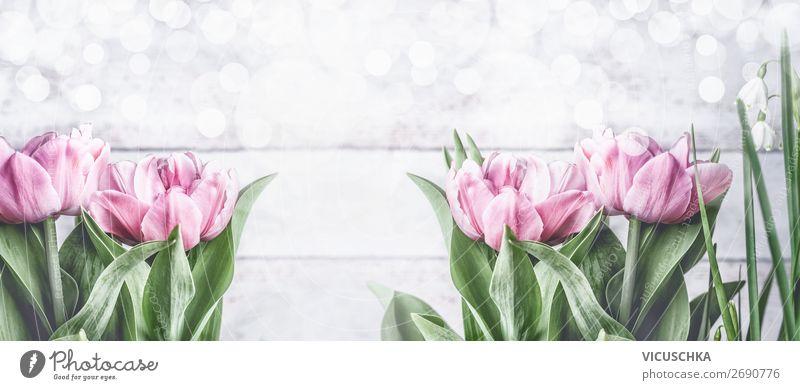 Frühling Hintergrund mit rosa Tulpen Stil Design Garten Feste & Feiern Natur Pflanze Blume Blatt Blüte Dekoration & Verzierung Blumenstrauß Fahne Blühend