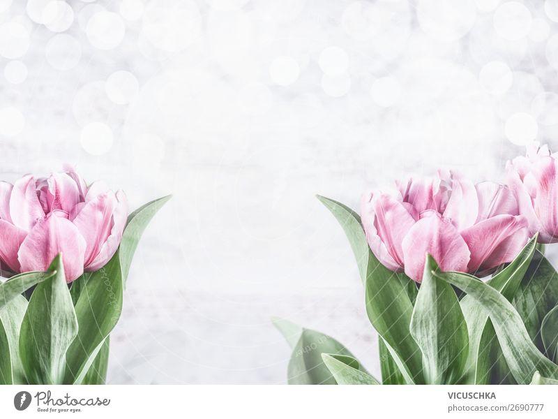 Rosa Tulpen auf weißem Hintergrund Stil Design Feste & Feiern Muttertag Ostern Hochzeit Geburtstag Natur Pflanze Frühling Blume Dekoration & Verzierung