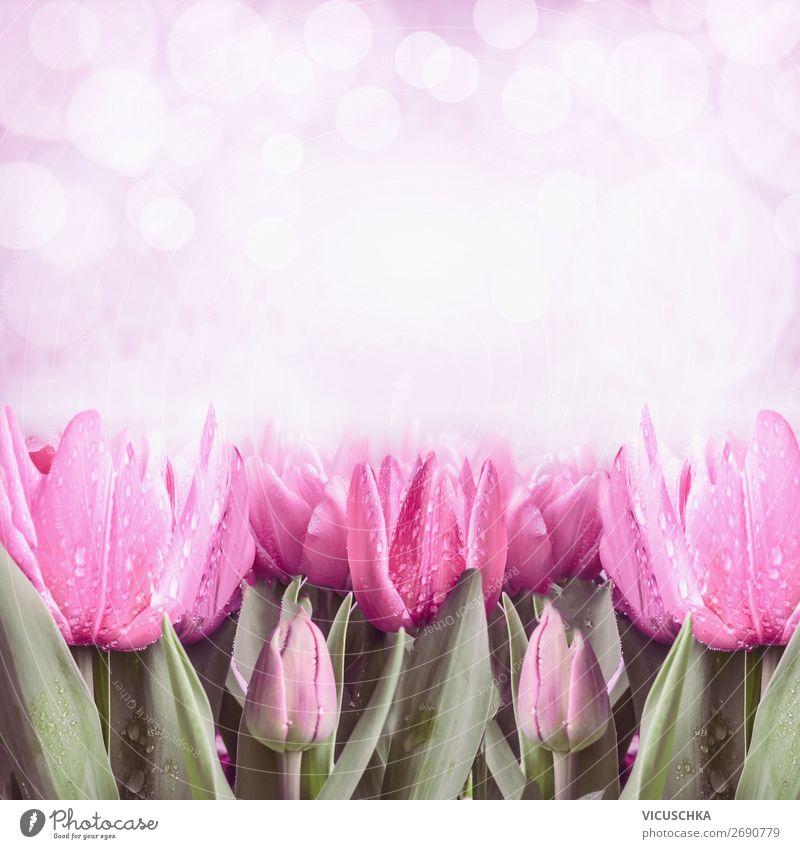 Pink frühling Tulpen Stil Design Sommer Feste & Feiern Muttertag Ostern Natur Pflanze Frühling Baum Garten Dekoration & Verzierung Blumenstrauß Blühend rosa
