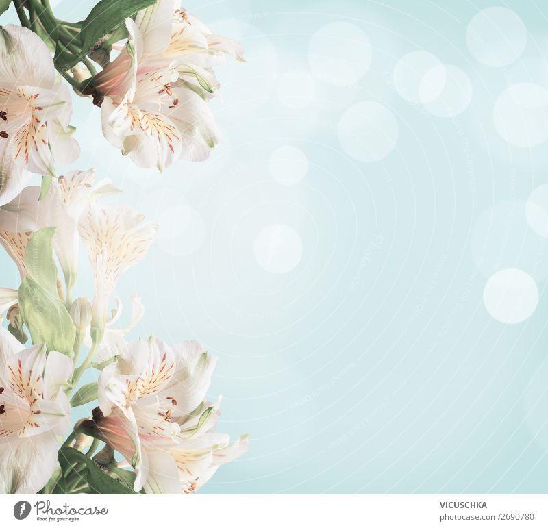 Weiße Blüten auf hellblauem Hintergrund mit grünen Blättern und Bokeh. Abstrakter floraler Hintergrund. Frühling Natur weiß Licht abstrakt geblümt weich