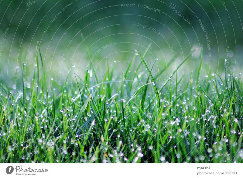 Morgenstund hat Gold im Mund Natur Landschaft Wassertropfen Frühling Sommer Herbst Pflanze Garten Wiese blau grün Unschärfe saftig satt sattgrün Gras Grasland