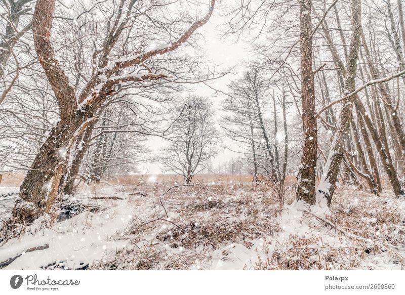 Schnee in einem Wald mit barenaked Bäumen bei schneereichem Wetter schön Winter Weihnachten & Advent Umwelt Natur Landschaft Himmel Nebel Baum Gras Coolness