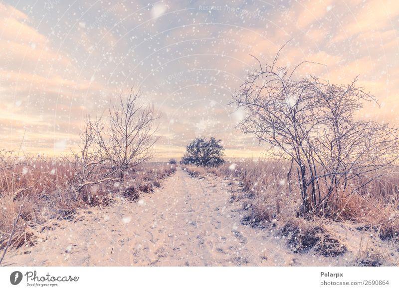 Schneefall auf einer verschneiten Winterspur am Morgen schön Ferien & Urlaub & Reisen Natur Landschaft Klima Wetter Baum Park Wald Straße Wege & Pfade blau weiß