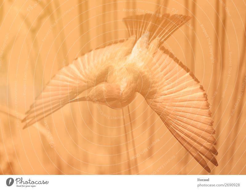 Vogel, der in einem australischen Museum in lebenden Korallentöne gefüllt wurde. schön Leben Freiheit Tier Wildtier 1 fliegen träumen authentisch