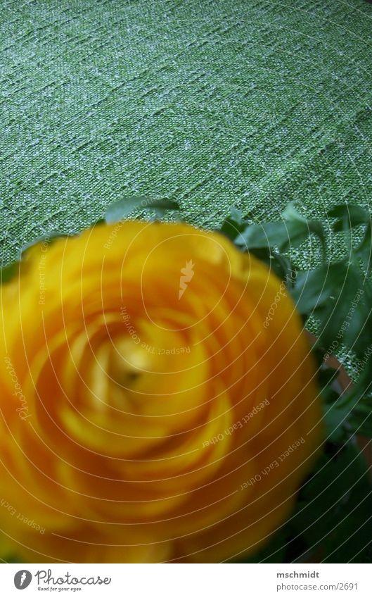tischblume/blumentisch Blume grün Pflanze gelb orange Tisch Decke