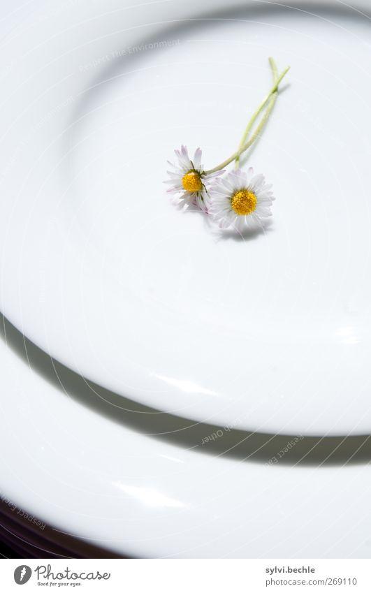 Hasenmahlzeit Ernährung Bioprodukte Vegetarische Ernährung Diät Fasten Geschirr Teller Natur Pflanze Frühling Sommer Blume Wildpflanze Blühend liegen schön