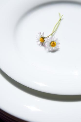 Hasenmahlzeit Natur weiß schön Pflanze Sommer Blume Liebe Ernährung Frühling klein Zusammensein liegen Dekoration & Verzierung Kitsch Blühend Geschirr