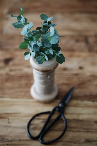 Eukalyptus Natur Pflanze Blatt Grünpflanze Gefühle Handwerk Floristik Eukalyptusblüte Dekoration & Verzierung grün altehrwürdig Schere Gartenarbeit Stillleben