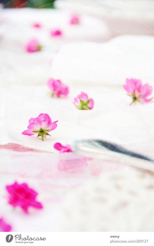 summer-brunch Pflanze schön Gefühle Stil Lifestyle Feste & Feiern Stimmung rosa Dekoration & Verzierung Geburtstag Ernährung Romantik Hochzeit Rose Kitsch Gastronomie
