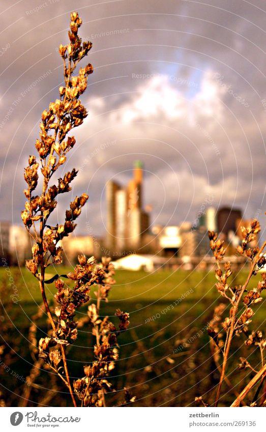 Potsdamer Platz Umwelt Natur Landschaft Gewitterwolken Sommer Herbst Klima Klimawandel Wetter Schönes Wetter schlechtes Wetter Unwetter Sturm Pflanze Park Stadt