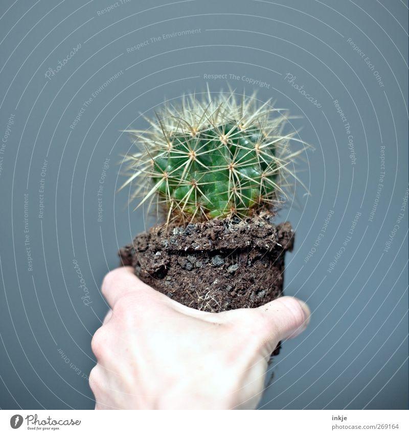 der Inbegriff von durstig Hand grün Leben Gefühle klein Stimmung Erde Wachstum Spitze Vergänglichkeit festhalten Mitte trocken zeigen Rettung Durst