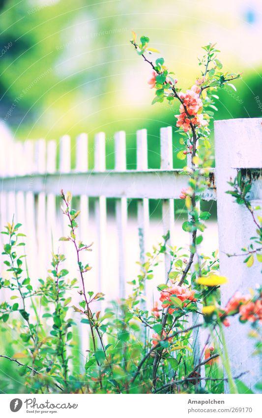 ::12-4:: Natur Pflanze Blume Erholung Umwelt Blüte Wiese Gras Tod Garten Park Sträucher Fröhlichkeit Klima Lebensfreude Schutz