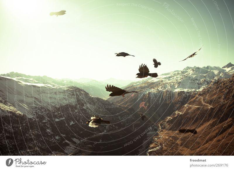23 dohlen Umwelt Natur Landschaft Luft Himmel Wolkenloser Himmel Horizont Sonne Herbst Schönes Wetter Schnee Alpen Berge u. Gebirge Gipfel Schneebedeckte Gipfel