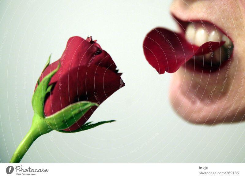 Ich ess Blumen, denn Tiere tun mir leid! Frau rot Erwachsene Ernährung Leben Gefühle Essen Stimmung außergewöhnlich verrückt Rose rein Blühend Wut Liebeskummer