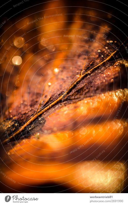 Braunes verschwommenes Blatt Nahaufnahme Natur Pflanze Herbst Baum braun Idylle Jahreszeiten defokussiert fallend Landschaft - Natur trocknen Ahornblatt