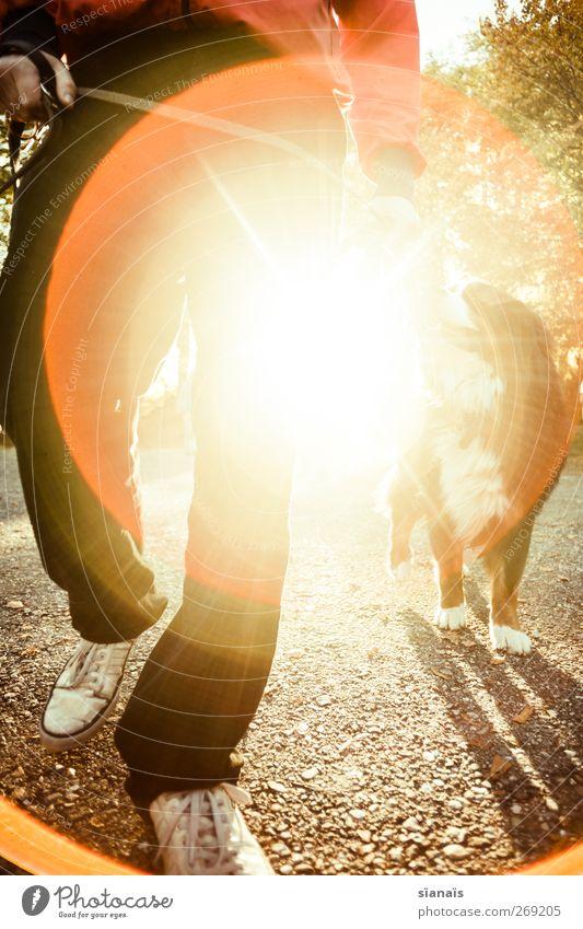 Sonntagsspaziergang Lifestyle Leben Freizeit & Hobby Sonne maskulin Mann Erwachsene Beine Fußgänger Wege & Pfade Tier Haustier Hund gehen laufen Gesundheit hell