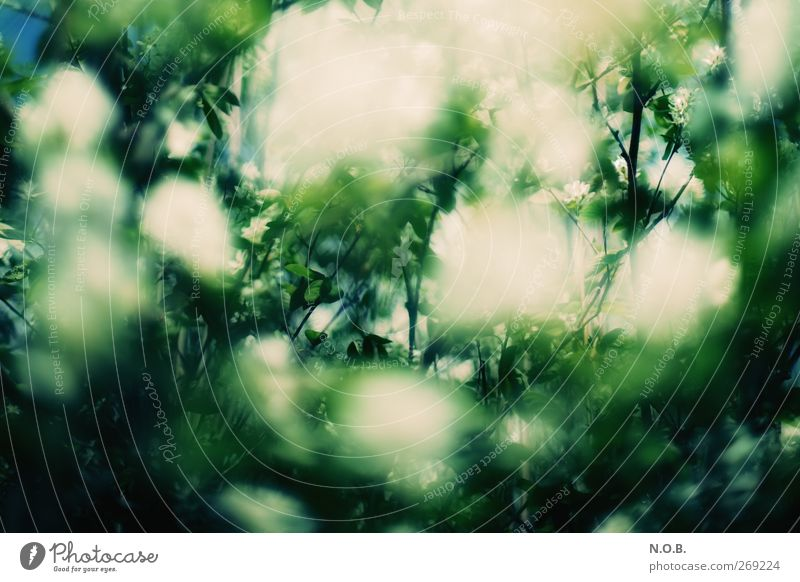 Blütenmeer II Natur grün Pflanze Umwelt Wiese Gefühle Frühling Garten Park natürlich ästhetisch Sträucher bedrohlich entdecken Duft