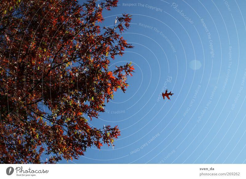 autumn wind Himmel Natur blau Baum rot Pflanze Sonne Blatt Herbst Luft braun Stimmung Wetter Wind Vergänglichkeit Jahreszeiten