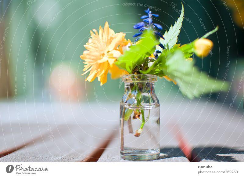 Geburtstagsblümchen Natur blau Wasser grün schön Pflanze Blume Freude Blatt Liebe gelb Gefühle Frühling Garten Blüte Glas