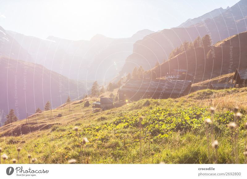 # 777 Schweiz Matterhorn Wahrzeichen Berge u. Gebirge Dorf wandern Mountainbike Trail Wege & Pfade Sonnenuntergang weiches Licht Gipfel Schneebedeckte Gipfel