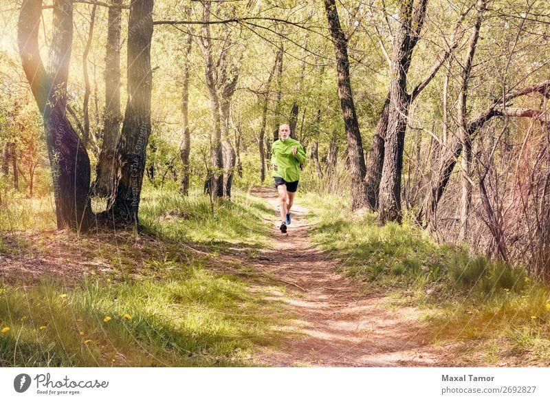 Senior Mann beim Laufen im Wald Lifestyle Glück Freizeit & Hobby Sommer Sport Joggen Mensch Erwachsene Natur Baum Park alt Fitness grün 60s Aktion Kaukasier