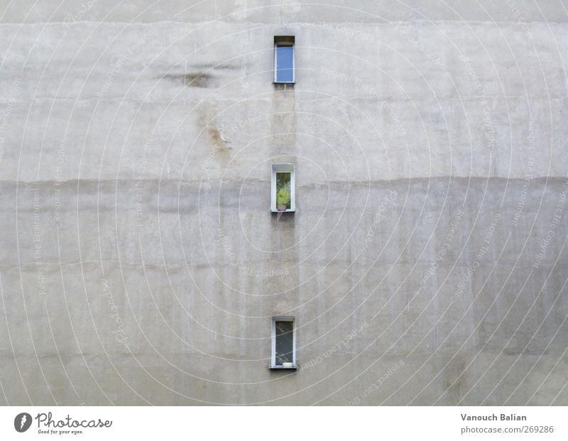 Fenster zum Hof grün Stadt Pflanze Einsamkeit Haus Fenster Wand Berlin Architektur grau Mauer Gebäude Angst Fassade dreckig trist