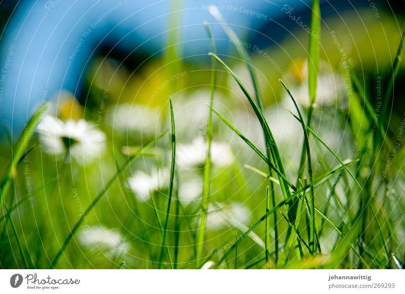 grasgrün zwei. Natur blau grün Umwelt Gras hell frisch verrückt Sträucher bedrohlich Sportrasen Moos knallig gesättigt