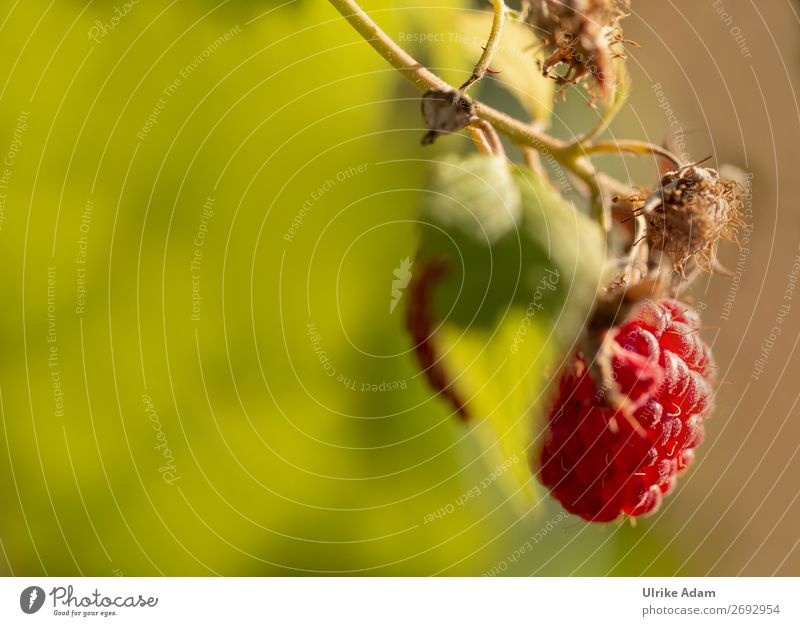 Himbeere Frucht Beeren Beerensträucher Gesundheit Alternativmedizin Gesunde Ernährung Wellness Leben harmonisch Wohlgefühl Erholung Meditation Spa Tapete