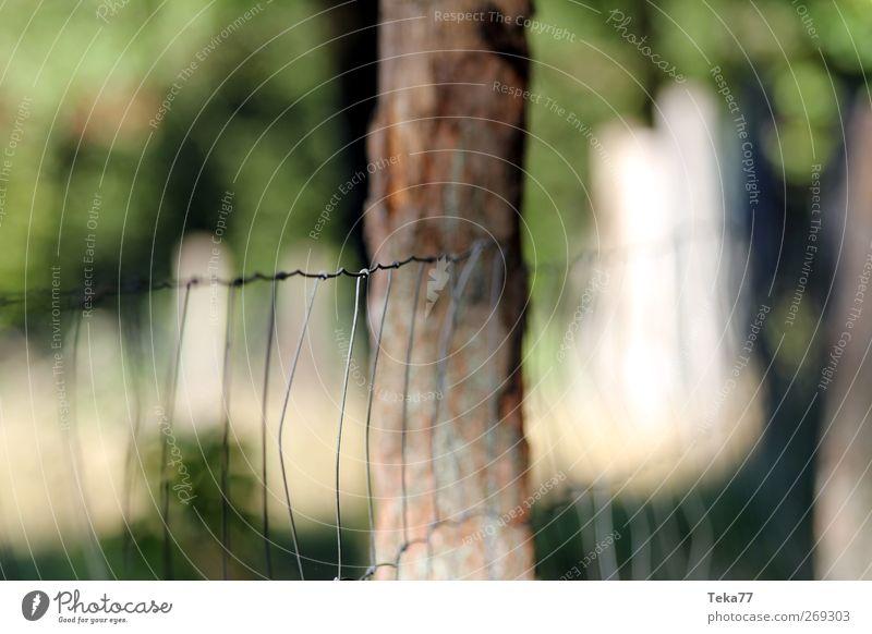 Im Tierpark Natur grün Sommer Freude Umwelt gelb Frühling Holz braun Metall Horizont Freizeit & Hobby Tourismus Kindheit Ausflug Neugier