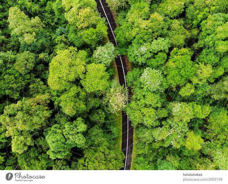 das ist eine straße. Umwelt Natur Baum Grünpflanze Wald Urwald Verkehrswege Autofahren Straße frei grün Reinheit Drohne Aerial Wege & Pfade Reise