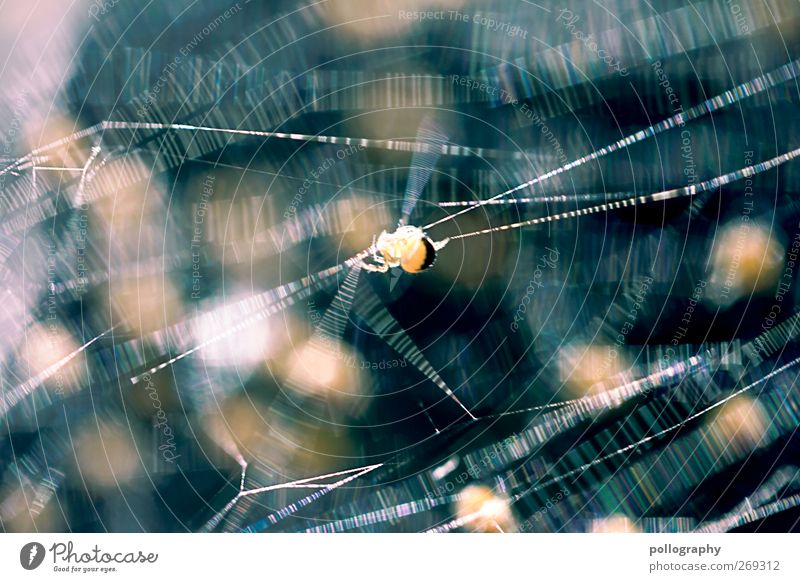 Das große Krabbeln (III) blau Sommer Tier gelb Frühling klein Tierjunges gold Angst Wildtier laufen Wachstum Tiergruppe Schönes Wetter dünn Ekel
